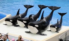 Marine park attractions: can they survive? As SeaWorld is hit with a lawsuit by shareholders – the latest setback for the ailing company – we ask what the future holds for marine park attractions