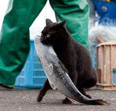 .bonne pêche...