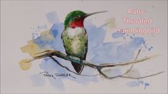 How to paint a Ruby-Throated Hummingbird in Watercolour. Easy to follow ...