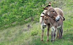 Donkey cuddles.