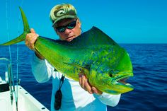 Dophin (Mahi) and Costa Sunglasses!   www.kevinscatalog.com #seewhatsoutthere