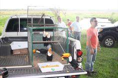 soltura de pássaros Home Appliances, House Appliances, Appliances