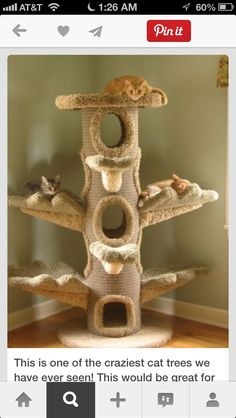 DIY cat house picture