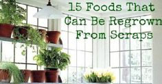 These 15 Foods can be Easily Regrown from Kitchen Scraps