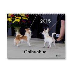 Chihuahua 2015 Calendar | Zazzle