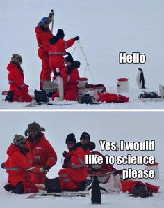 Penguins. We get around.