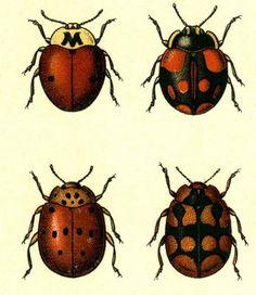 BibliOdyssey: Butterflies and Beetles