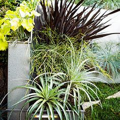 24 surprising plant combos   Cool, calm, and collected   Sunset.com Ever red phormium, feathery thread leaf Nandina, spiny silver Puya coerulea, chartreuse huechera amond mondo grass in back