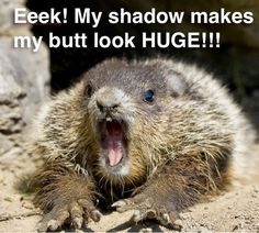 Well, in case you didn& hear, Groundhog Phil saw his shadow this morning, which means 6 more weeks of winter. In honor of Groundhog Day, we. Animal Memes, Funny Animals, Cute Animals, Wild Animals, Groundhog Pictures, Funny Cute, Hilarious, Happy Groundhog Day, Funny Memes