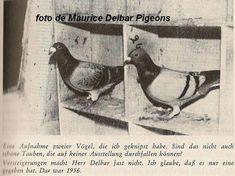 Anton Van, Pigeon Loft, Racing Pigeons, Loft Design, Bird Art, Vermont, Mario, Birds, Places
