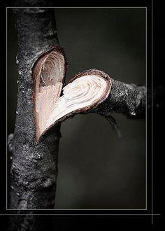 Amazing... Corazón de tronco de árbol