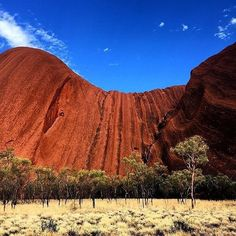 The striking contrast of Uluru's deep red hue against the blue sky is a must-see on any trip to  @ausoutbacknt . If you think there's not much life in the desert, think again - these rolling red sand dunes are surprisingly alive with grassy native vegetation and a myriad of wildlife. In fact, the 1,325 square kilometres of the beautiful Uluru-Kata Tjuta National Park are home to 21 species of mammals, loads of birds, reptiles and more than 400 species of plants. Photo:  @davidprior