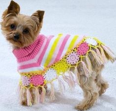 Poncho para cães, cute!