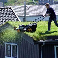 5 Motivos para voce deixar seu telhado vivo! Motivo 1: Os telhados verdes purificam o ar Motivo 2: Sua casa mais fresca Motivo 3: Captação de água da chuva Motivo 4: Isolamento acústico Motivo 5: A biodiversidade no telhado da sua casa