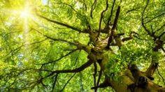 Image copyright                  Thinkstock                  Image caption                                      Un árbol reduce en su entorno entre un 7% y un 24% del material particulado, uno de los tipos más dañinos de contaminación.                                Sólidos y serenos, vivos y vibrantes. Los árboles producen en muchas personas un efecto cal