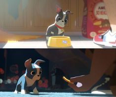 Feast is Disney's short film featuring a Boston Terrier dog!