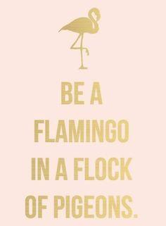 Because Flamingos rock!