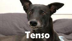Tenso!!!