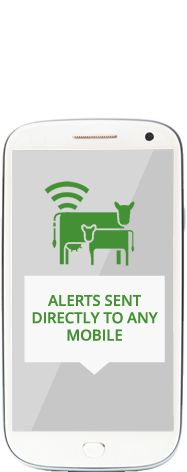 Moocall Sensors - SMS notification when a cow is calving
