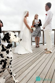 I just love the fact they have a Dalmatian in the wedding photo..