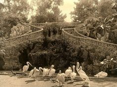 Vintage Photo Inside Ezbekeya Garden, Cairo, Egypt, 1895. | Flickr