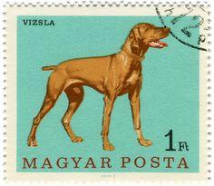 Hungary postage stamp: vizsla dog