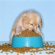 Homemade Dry Dog Food Recipes