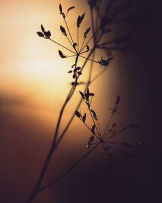 Light and shadow #tv_depthoffield #fingerprintofgod #fiftyshades_of_twilight #the_gallery_of_magic #heart_imprint #global_ladies #m3xtures #romantic_darkness #lovelydeadcrap #minimal_mextures #mode_emotive #na_natures_art #moodynature #inthemoodfor_macro #nature_maniacs #ig_myshot #rsa_naturepics #gottalove_a_ #tv_allnature #fotofanatics_nature_ #sombresociety #sombrescapes #naturehippys #vzcomacro #everything_imaginable #mextures #moodygrams  #gloomgrabber #macromood #itmfmacro_mono by…