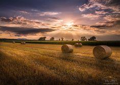 Golden field by Peter Zajfrid on 500px