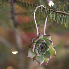 Décorations de saison avec des plantes grasses