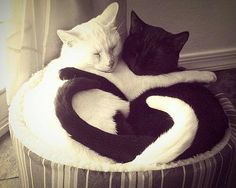 Black and white kitty heart!!!
