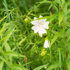 Rockwood Conservation Area White Flower. ON, Canada. Summer 2015. Photo: Anna Niemywska