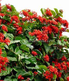 Gardenesia  Buy Plants Online India   Best Online Garden Store In India  Http://gardenesia.com | Online Gardening Store India | Pinterest | Plants  Online, ...