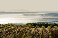 Ridge Vineyards: Exceptional single-vineyard wines since 1962