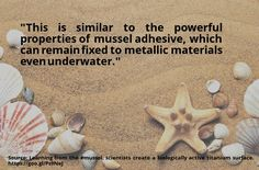 cool #quote Learning from the #mussel, scientists create a biologically active titanium surface