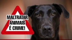 Measures and penalties to the crime of mistreatment of animals in the city of Paranaguá.