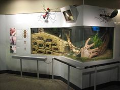 World of the Insect - Leafcutter Ant Exhibit