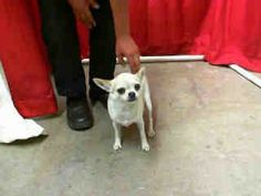 Time is up at the shelter for this dog.  Will you save their life? They need an adopter to save them or they will very soon succumb to euthanasia.  Remember - dogs in the shelter are often stressed & scared.  It's a frightening place to be.  They...