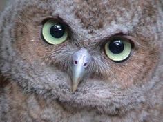 Alabama Wildlife Center - Owlery