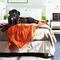 Training Your Dog to Stay Off Your Bed