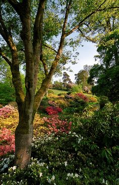 Leonardslee Gardens, West Sussex, UK | Multi-colored azaleas beneath trees in Spring (18 of 23) | Flickr - Photo Sharing!