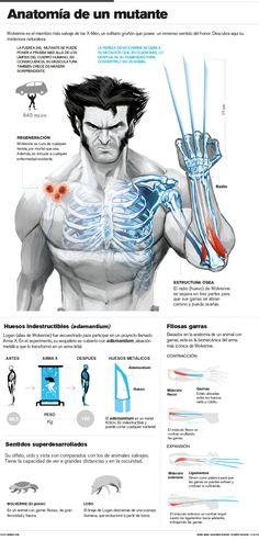 #Infografía: Anatomía de un mutante, #Lobezno | Cosas tontacas / Humor, cine, videojuegos y otros vicios