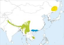 Distribution range map for Rufous-bellied Woodpecker (Dendrocopos hyperythrus)