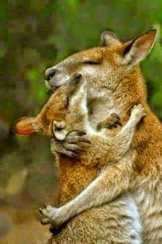 Kenguru mama picinyével