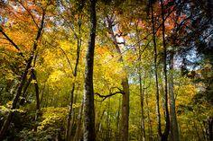 A Picture Perfect Michigan Fall Color Tour
