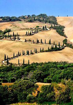 Cypress hills - La Foce, Tuscany