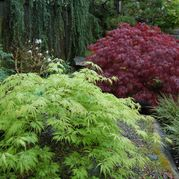 Top 10 Native Plants for the Pacific Northwest