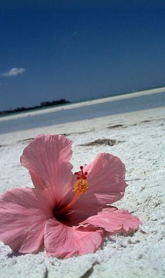 Florida living.