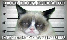 "...because some days, ""soft kitty"" just doesn't cut it"