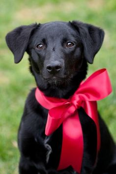 christmas card dog photo ideas.   If you could ever get them to hold still!